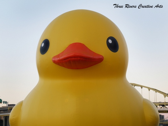 Hello from the rubber ducky1